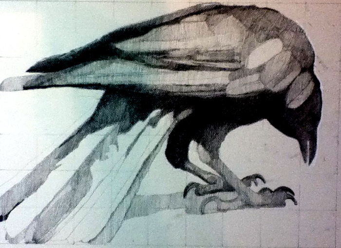 New Crow, Work in Progress, Charcoal, 12 x 18 inches