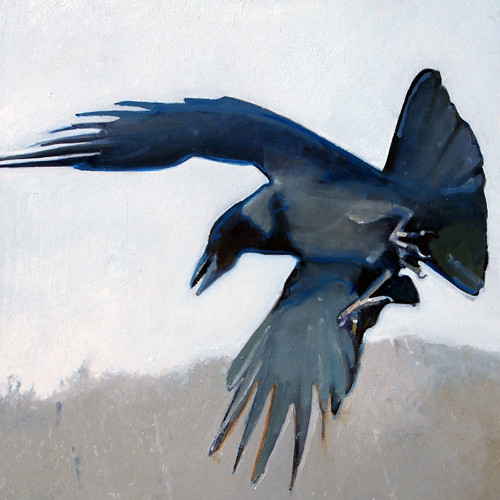 Hooded_Crow_16x16