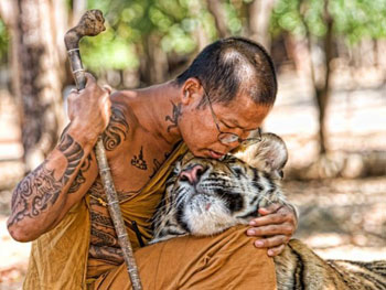 tiger_temple_thailand_pic26