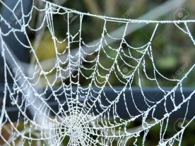 11372226-spider-web-with-frost-in-winter-stock-photo