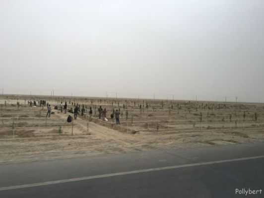 tree planting to keep the desert at bay