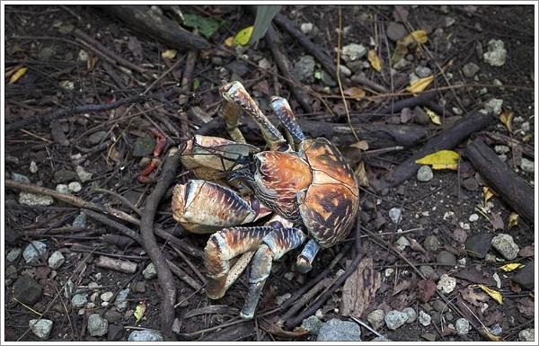 crabs-07022016-003