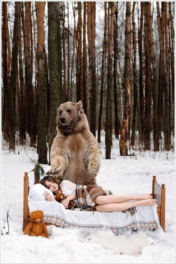 bear-stepan1