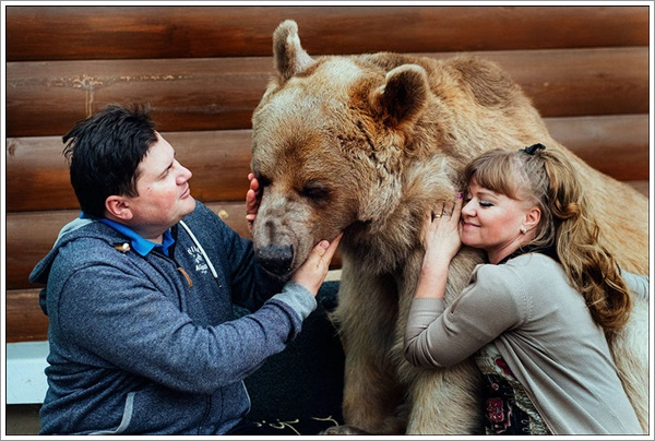 bear-stepan10