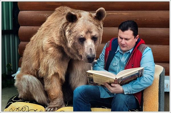 bear-stepan12