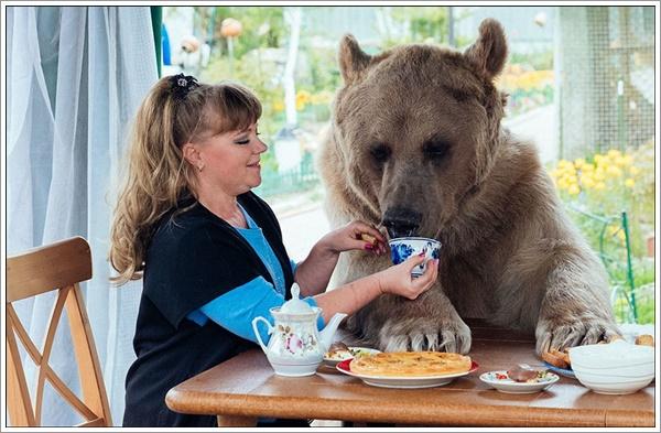 bear-stepan13