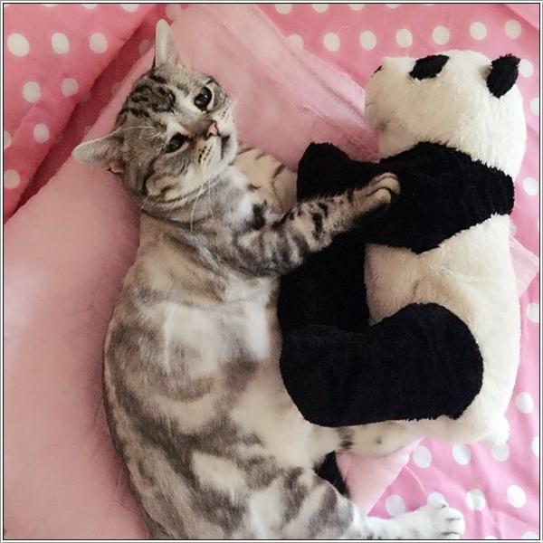 saddest-cat13