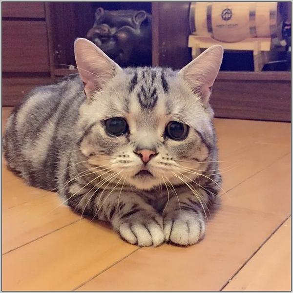 saddest-cat6