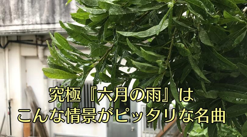 沖縄の梅雨の時期の葉っぱと雨のしずく