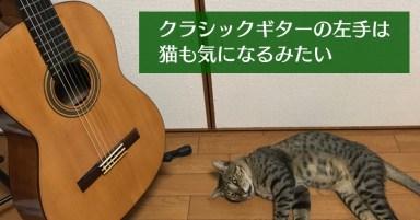 クラシックギターの左手と猫