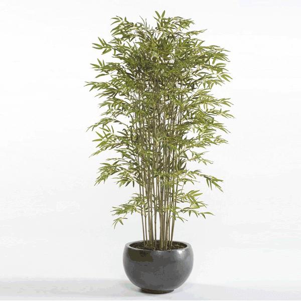 Árbol Bambú Deluxe