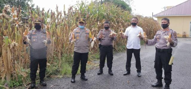 Jaga Ketahanan Pangan, Polres Simalungun Budidaya Ikan Lele, Berkebun Jagung dan Sayur-sayuran.