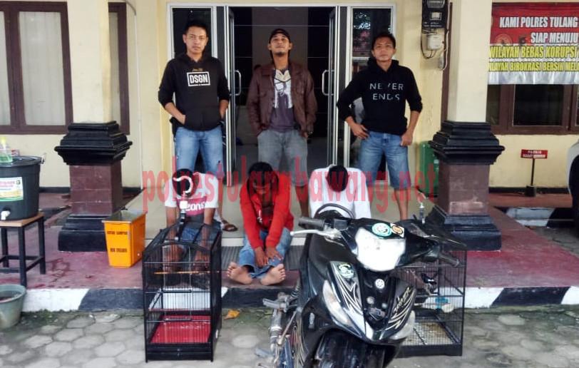 Tiga Pelaku Curat Burung Kicau Yang Berhasil Ditangkap Petugas