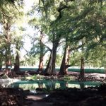 En bici a Los Ahuehuetes Tepeojuma