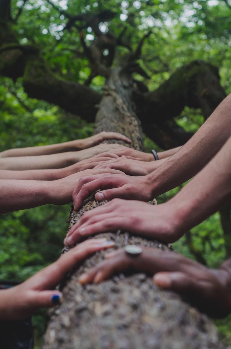 people touching tree