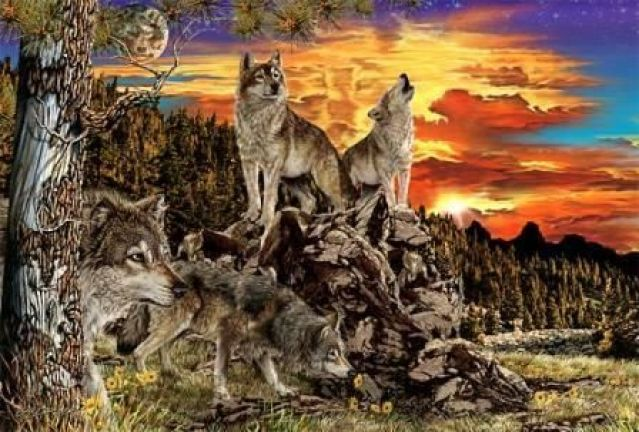17 wolves