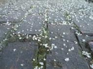 The Fallen Petals