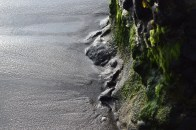 https://polymathically.wordpress.com/2014/12/11/algae-on-a-gray-sand-beach/