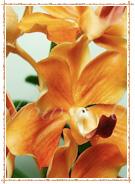 from Thai Flower Art