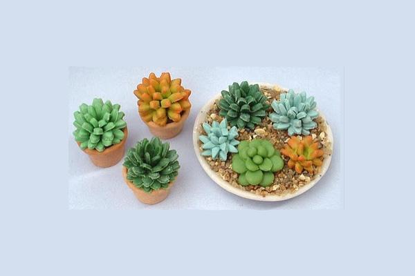 clay-succulents