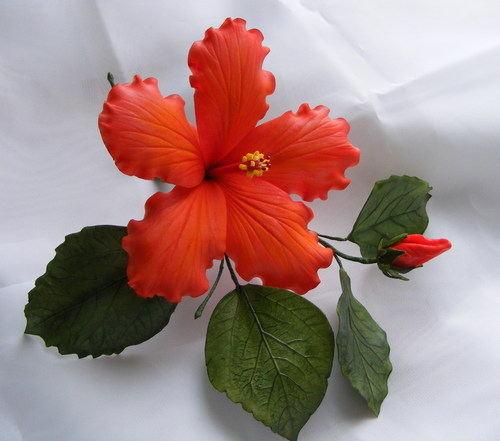 Hibiscus Flower Modeling