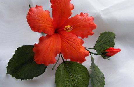 Hibiscus Flower Modeling