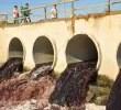 Trakya'nın siyanür nehri: Ergene Edirne'de Ergene Nehri üzerinde yapılan son ölçümler, suda oluşan kirliliği gözler önüne serdi. Alınan numunelerde 1 litre suda 30 mikrogram siyanür tespit edildi. Trakya'nın en önemli […]