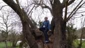 After climbing Volcán de Santa Margarida, A. chooses to climb a tree.