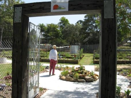 community garden varsity lakes 002