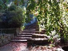 botanic gardens Tasmania 203_4000x3000