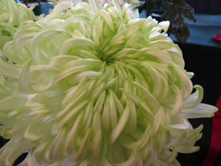 I love the soft, delicate green centre