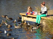 Feeding ducks on the Coal river