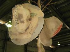 Battered brown Akubras