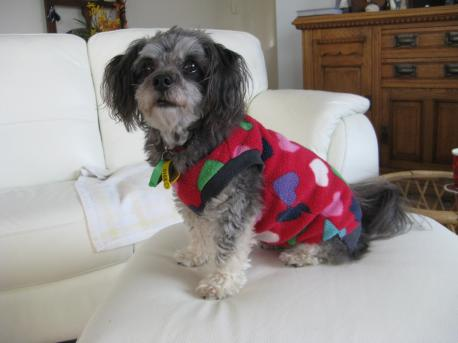 Pippa in her winter jacket