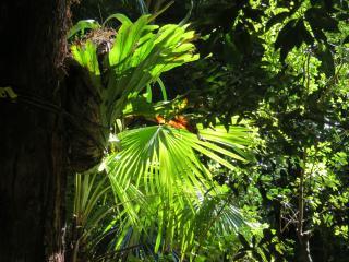 Botanic gardens 2 PC sx40 038_4000x3000