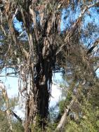 Canberra botanic gardens pc 041_3000x4000