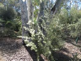 Canberra botanic gardens pc 060_4000x3000