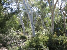 Canberra botanic gardens pc 074_4000x3000