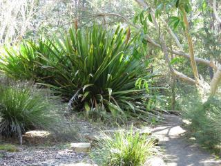 Canberra botanic gardens pc 110_4000x3000