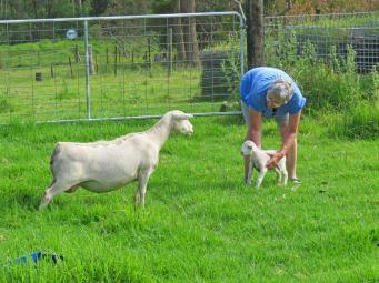 lamb jc 003_4000x3000
