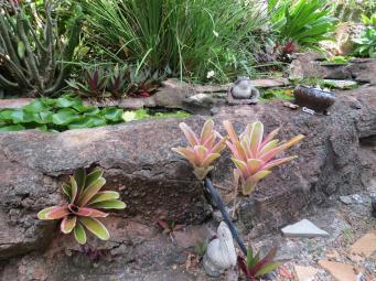 Bromeliads bat plant pc 028_4000x3000