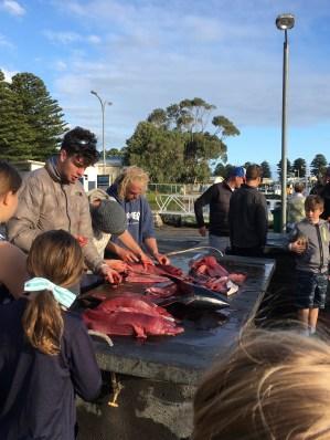Copious Quantities of Tuna Innards