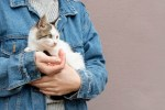 Adrianna: Pomoc dla kota