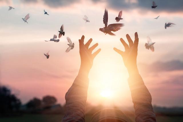 Wolność, wdzięczność, ręce