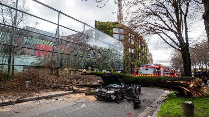 🇫🇷 Paris (75) : Un automobiliste tué par la chute d'un arbre