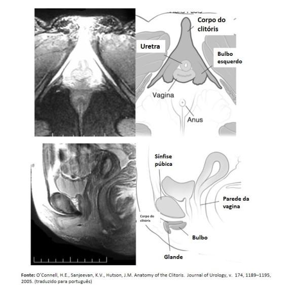 formatos diferentes de vaginas