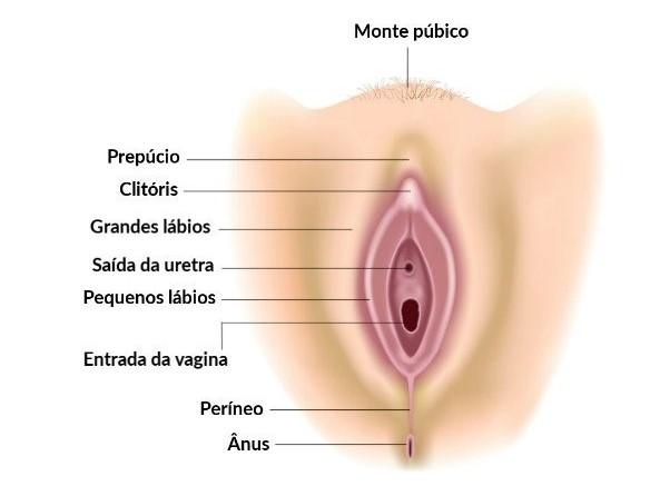 Vagina e vulva
