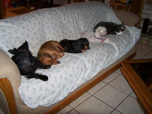 Dogs and cats on the couch