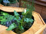 Small pond raised above ground and boxed in.