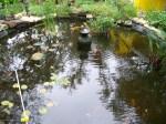 New Big Pond